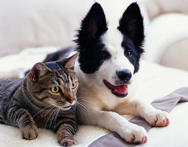 Cuddling dog and cat